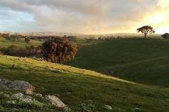 Hut-on-the-hill-heathcote-600px-hill