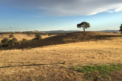 Hut-on-the-hill-heathcote-1000px-01